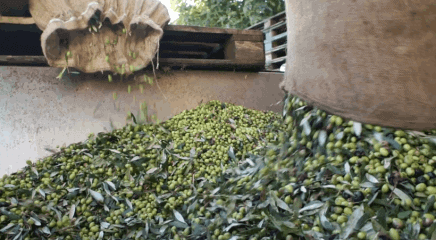 The milling of Nestor's olives